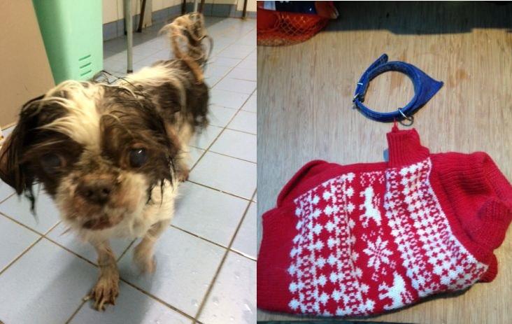 Politie zoekt eigenaar verwaarloosde hond