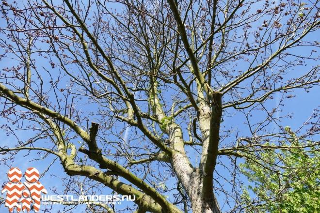 Vergiftigde bomen bij toeval aangetroffen