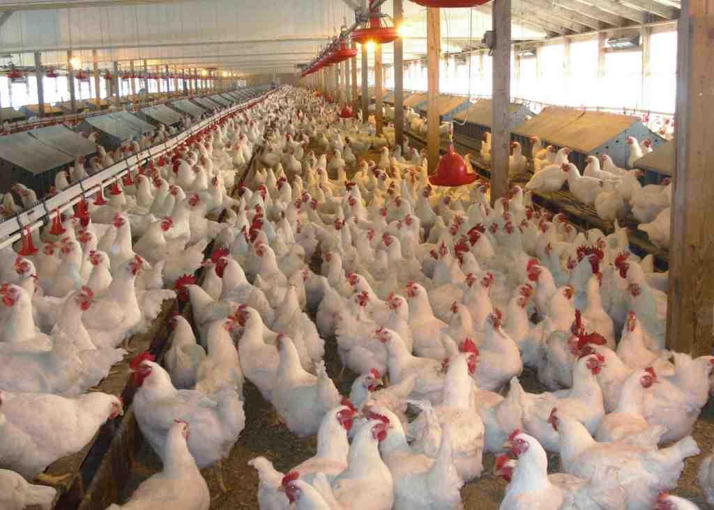 Aanpassing maatregelen bestrijding vogelgriep