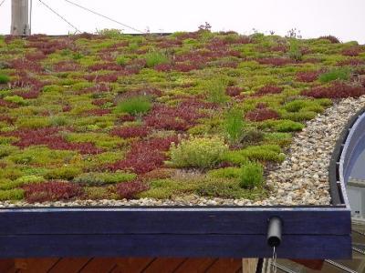 PW; Groene daken goed tegen wateroverlast