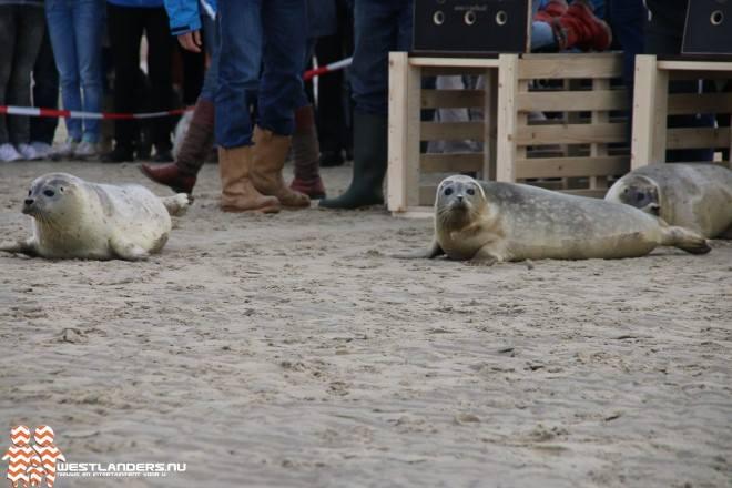 Onderzoek naar opvangbeleid zeehonden