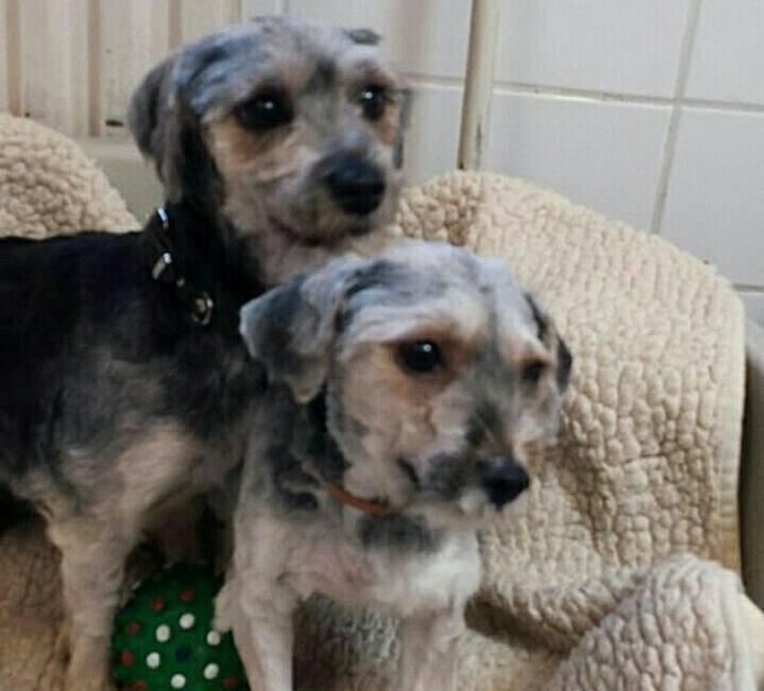 Verwaarloosde hondjes naar de kapper