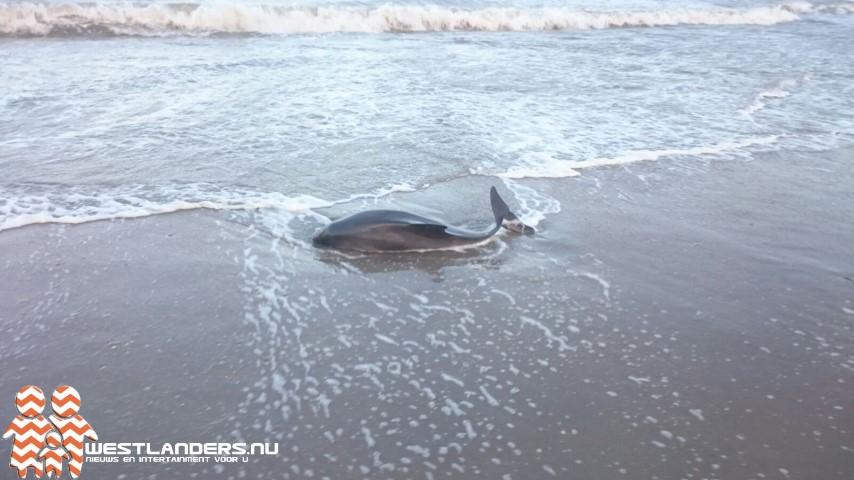 Flinke toename bruinvissen in de Noordzee