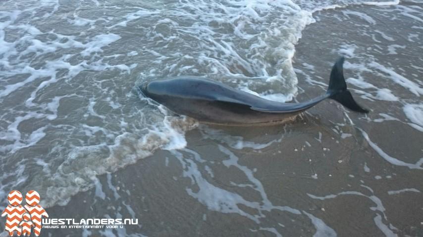 Toename bruinvissen in de Noordzee