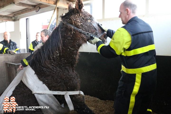 Paard in de problemen