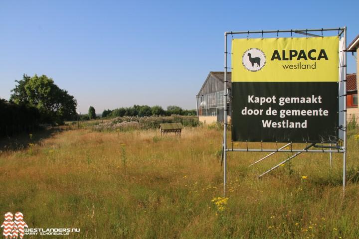 Theo Enthoven wil Alpaca 's terug in het Westland