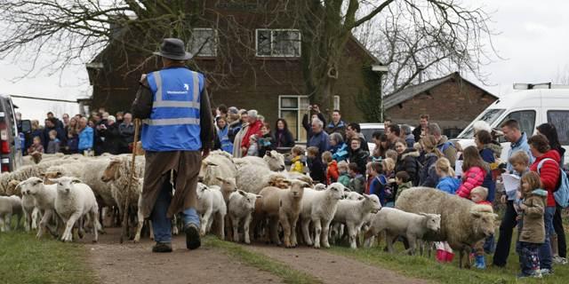 Rijkswaterstaat draagt boerderij over aan schaapskudde Vockestaert