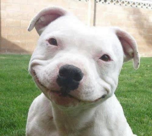 Poging tot beroving hond