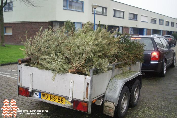 Gemeente Westland betaalt € 0,50 per ingeleverde kerstboom