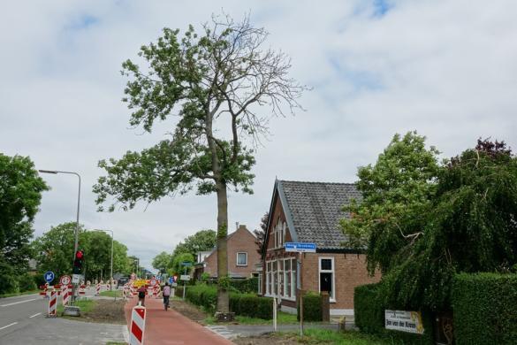 Weghalen bomenwortels geen zaak voor gemeente