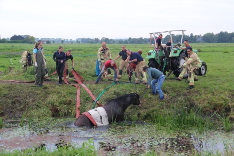Brandweer redt paard uit de sloot