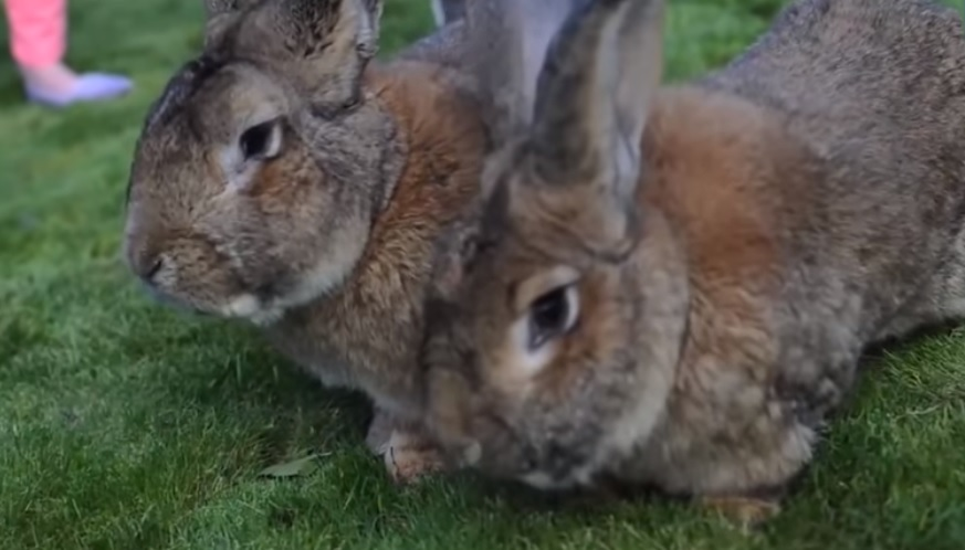 Vernietigde konijnenholen bij slag Beukel waren leeg