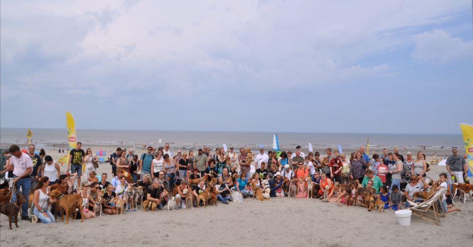 Geslaagde strandwandeling met Podenco 's