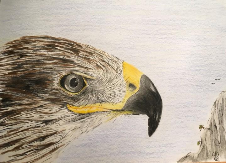 Prachtige vogeltekeningen te bewonderen in Bibliotheek 's-Gravenzande