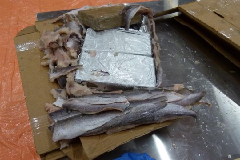 1100 kilo cocaïne tussen bevroren vis