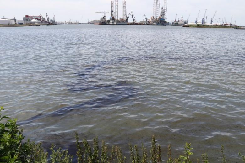 Alarmfase afgekondigd voor vervuilde vogels Nieuwe Waterweg