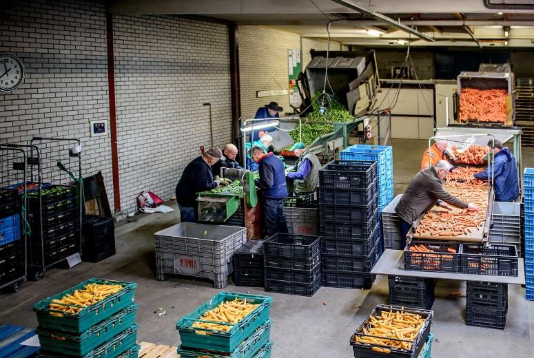 Voedselbank zoekt Westlands talent