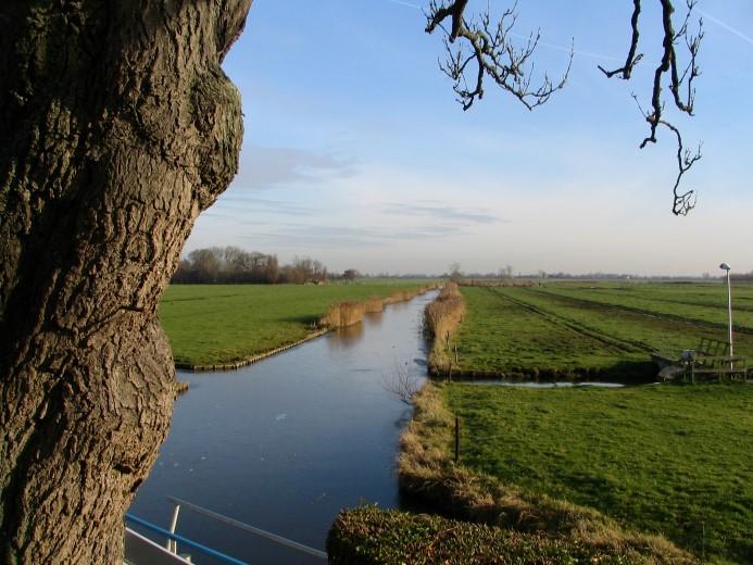 Boek over bijzondere bomen in Midden-Delfland