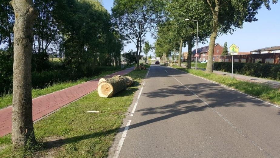 Rondvragen inzake bomenkap Arckelweg