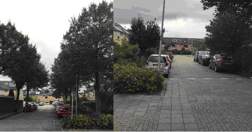 Rondvragen betreffende overlast bomen en parkeerproblemen Meibloem