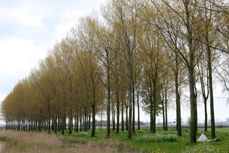 Natuurorganisaties; Bomenkap Kraaiennest onbegrijpelijk