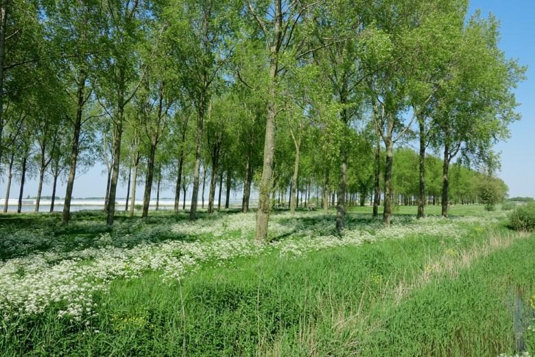 Breed gedragen oplossing voor bomenkap Kraaiennest
