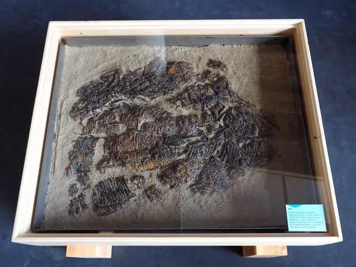 Oudste wan van Nederland gevonden in tracé Blankenburgverbinding