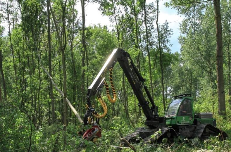 Boomveiligheidscontrole staatsbosbeheer in bos Broekpolder