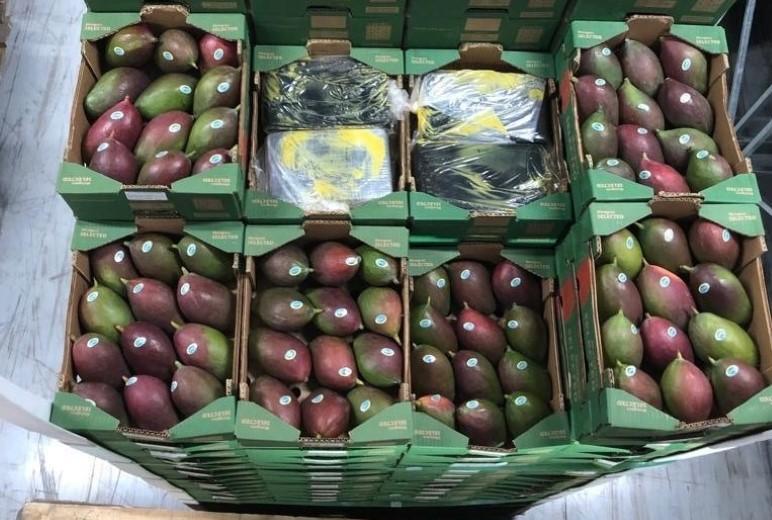 Douane onderschept 550 kilo cocaïne tussen mango's