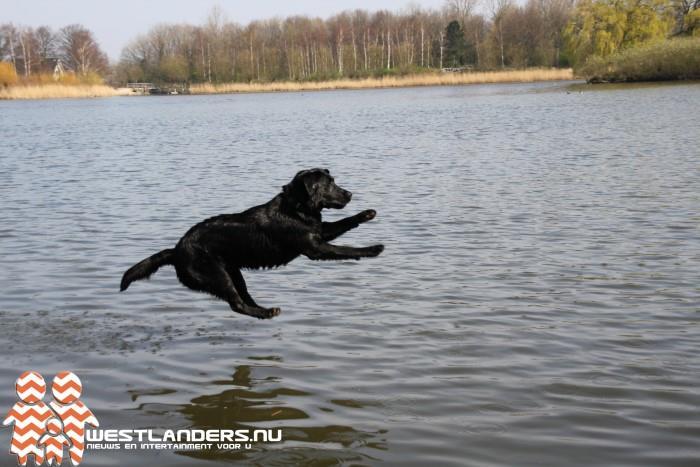 Geen aanlijnplicht voor honden in Prinsenbos
