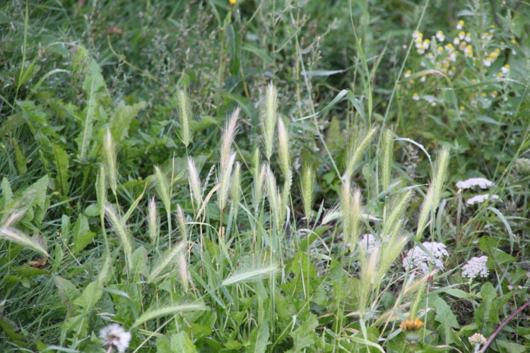 Dierenpolitie waarschuwt voor grasaren!