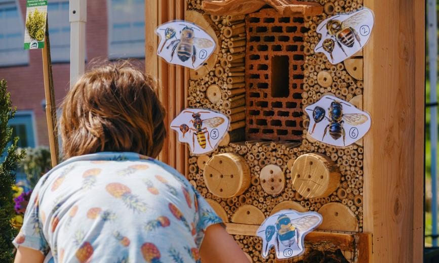 Provincie geeft bijenhotels weg aan gemeenten en basisscholen