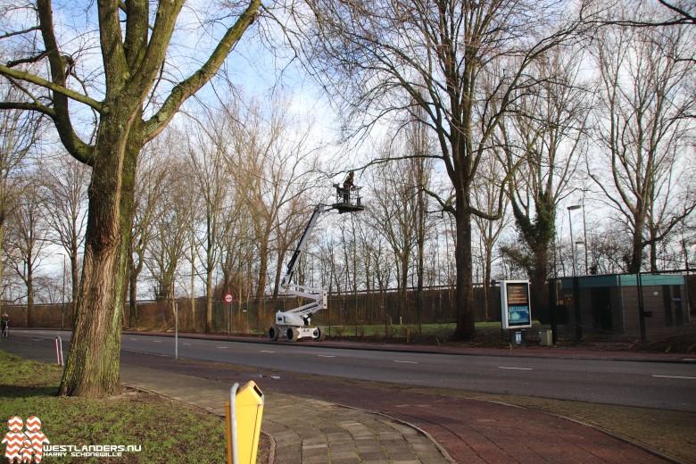 Collegevragen inzake bomenkap Rozenlaan Maassluis