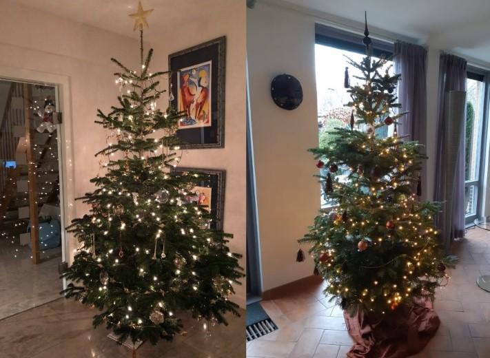 Kerstbomenverkoop Rotary Maassluis voor ouderen