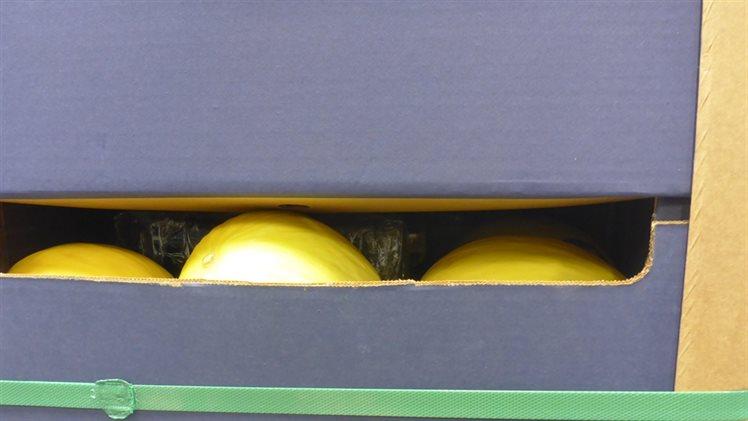 Douane vindt 2500 kilo cocaïne tussen meloenen