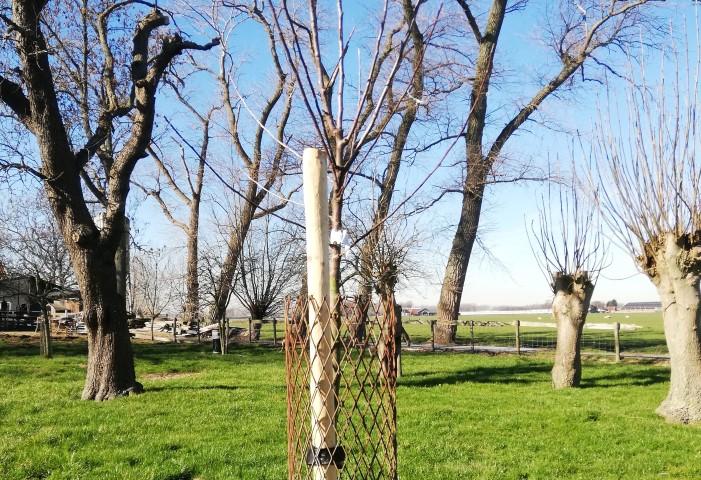 Schipluiden krijgt er een boomgaard en pluktuin bij