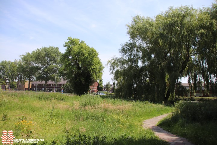 Bomenkap bij Boerstraat vrijdag een feit
