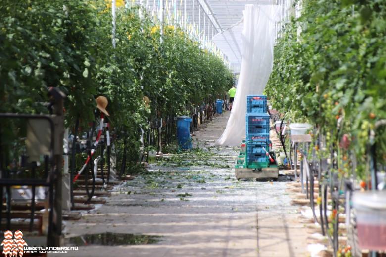 Windhoos trekt spoor van vernieling bij tuinbouwbedrijven