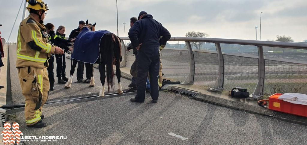 Paard bekneld op fietsbrug de Snelbinder