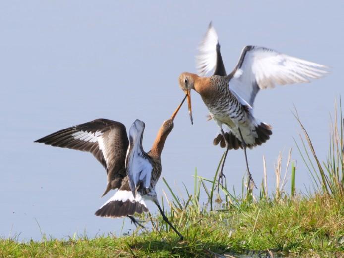 Jacob Bouw winnaar fotowedstrijd Natuur in Delfland