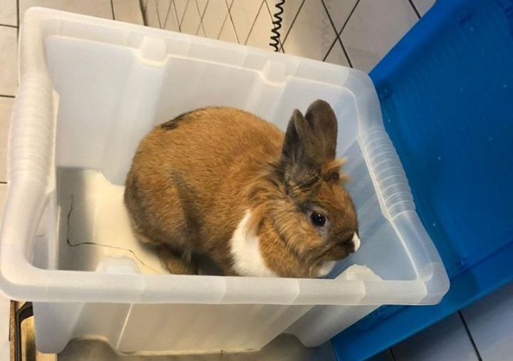Weer konijn gedumpt bij Madeweg