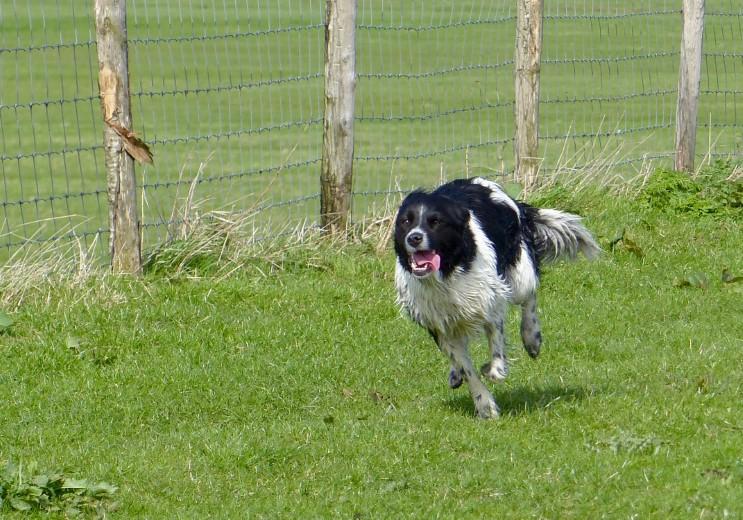Houd uw hond aan de lijn in de polder!