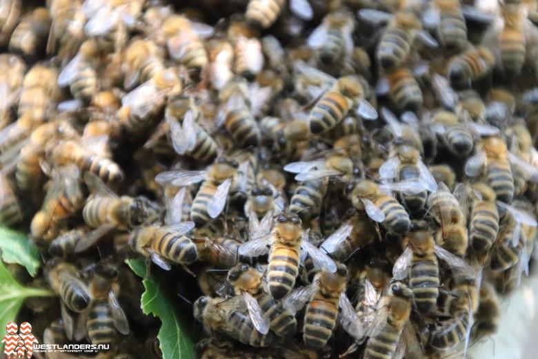Wederom Amerikaanse Vuilbroed bij bijen vastgesteld