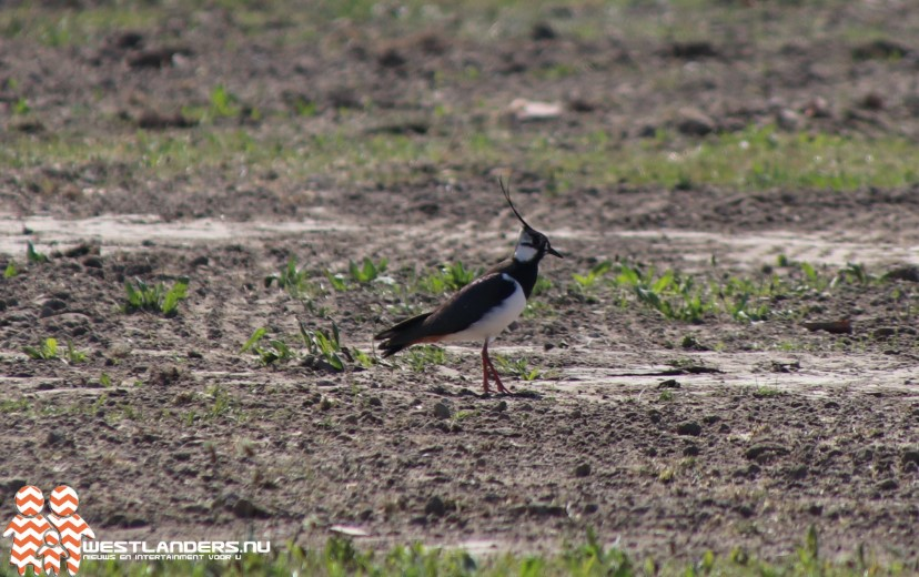 Aantal broedvogels in open boerenland gedaald