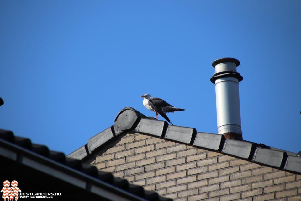 Gewonde meeuw op het dak