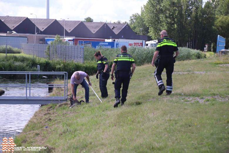 Drie ganzen doodgereden op de Burgemeester Elsenweg