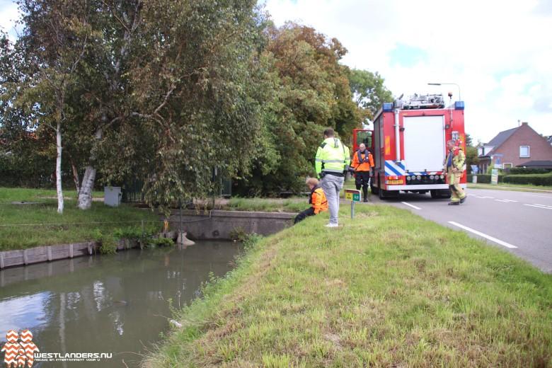 Schaap te water aan de Middel Broekweg
