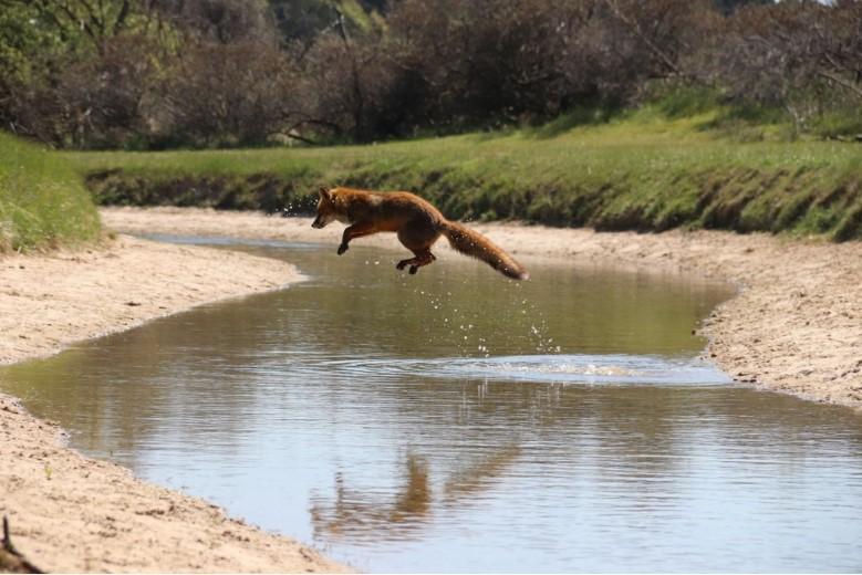 Fotowedstrijd: Natuur in Delfland