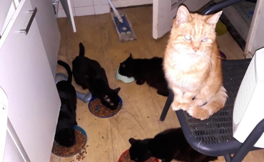Heel veel katten in een woning
