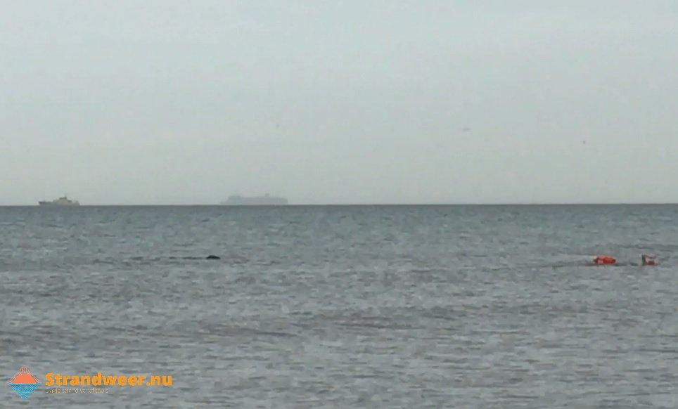 Zwemmer achtervolgd door zeehond